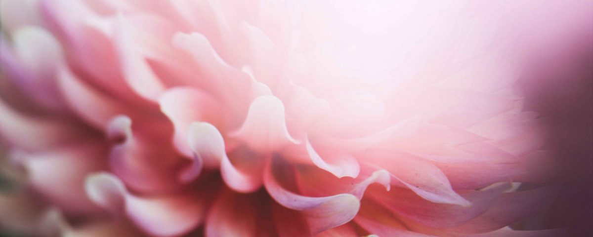 Petal Life and Love with HIV
